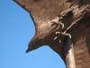 libby-eagle-1.jpg