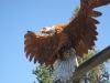 libby-eagle-2.jpg