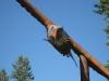 libby-eagle-3.jpg